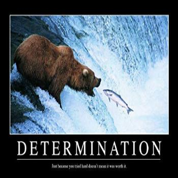 Determination Bear in Water Catching Fish Funny